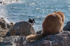 Meerkatzen