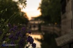Blumen zur goldenen Stunde