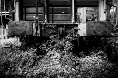 Plant Catches Train
